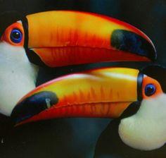 Tucans, twins, peaches, warm, subtle, calm, summer