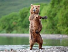 - Animals that they know how to party too