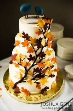 I wanted a snowy winter wedding too start off with but now it's turned autumn and all the pretty colours are just everywhere I really want an autumn wedding now :) imagine the colours you could have in an autumn wedding! I love this cake with the little birdys on top!