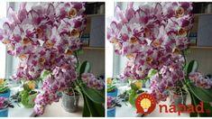 Keď idem zalievať orchideu, vždy sa držím tejto rady pani kvetinárky: Už roky kvitnú tak, že mi ich chodia obdivovať všetci susedia! Glass Vase, Home Decor, Belle, Interior Design, Home Interiors, Decoration Home, Interior Decorating, Home Improvement