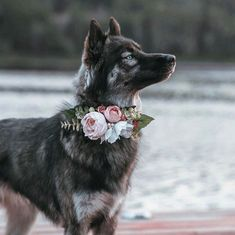 Excellent pretty dogs information are available on our website. Pretty Animals, Cute Baby Animals, Animals And Pets, Funny Animals, Beautiful Dogs, Animals Beautiful, Cute Dogs And Puppies, Doggies, Australian Shepherd Dogs