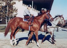 Secretariat - several descendants of this famous race horse also became big winners and had to be rescued from slaughterhouse kill pens after their career was over