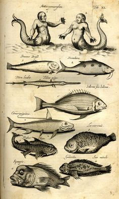 Jonston, Jan, natural history of fish whales V. - Frankfurt: Me . Jonston, Jan, natural history of Mythical Creatures, Sea Creatures, Nautique Vintage, Medieval Drawings, Scientific Drawing, Baroque Painting, Dark Drawings, Legends And Myths, Merian