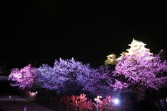 HimejiCastle Night Cherryblossoms