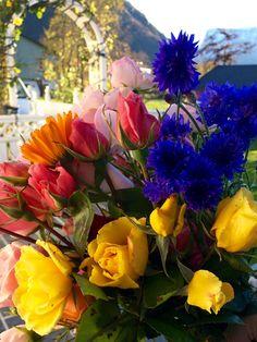 Последние цветы в ноябре, в моем саду - Норвегия😍👏👍🌹🌸🌺💐