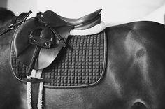 horse, english saddle, saddle pad, equine, equestrian, black and white photography