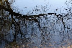 Reflection of a branch.