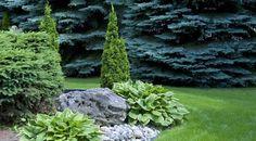 Love the fir, spruce, hosta, rock and boulder mix