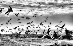 Gaivotas e Pescadores by Luis de Brito  - Photo 139313599 - 500px