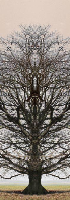 Totemtrees (janfufu 2013)-IMG_5996