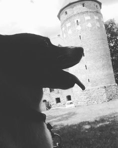 #polishgirl #polishboy #poland #polska #cute #sweet #love #me #friend #friends #holidays #weekend #fun #funny #happy #lovely #loveher #dog #puppy #harmony #photoofday #photography #instagram #instamood #l4l #like4like #dog #castle http://tipsrazzi.com/ipost/1513629800916772092/?code=BUBfkjNFuT8
