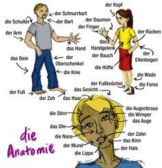 anatomie deutsch - Căutare Google