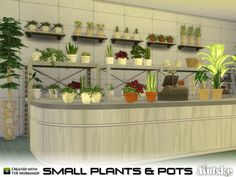 Small Plant and Pots by mutske at TSR via Sims 4 Updates