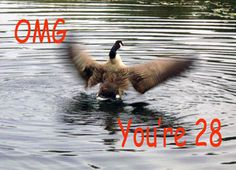 Happy 28th Birthday Goose flapping Greeting Card