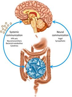 Gut Microbes and the Brain: Paradigm Shift in Neuroscience Enteric Nervous System, Autonomic Nervous System, Holistic Clinic, Gastrointestinal Disease, Brain Connections, Brain System, Gut Brain, Brain Diseases, Gut Microbiome
