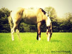 My horse, Bandit by Dream Vintage Photography
