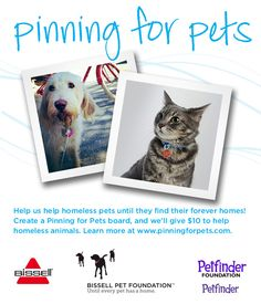 Help us help homeless pets until they find their forever homes! Create a Pinning for Pets board, and we'll give ten dollars to help homeless pets (up to fifty thousand dollars). Get pinning!