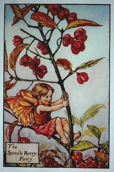 """Cicely Mary Barker, an Autumn fairy, """"The Spindle Berry Fairy."""""""