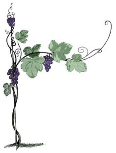Vine and branches Grape Drawing, Vine Drawing, Branch Drawing, Grape Tree, Grape Vines, Art Clipart, Etiquette Champagne, Vine And Branches, Wine Vine
