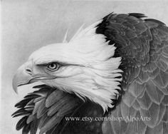 Hey, I found this really awesome Etsy listing at https://www.etsy.com/listing/110815703/realistic-eagle-pencil-drawing-8x10-fine