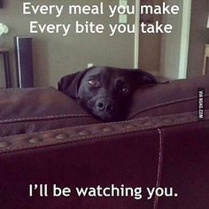 I Love Dogs, Puppy Love, Cute Dogs, Funny Dogs, Funny Animals, Cute Animals, Animal Funnies, Silly Dogs, Black Labs