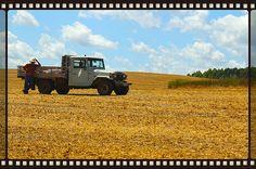 Field life...