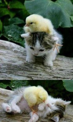 Love this :D   #bigbarker #animals #love