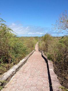 Tortuga Bay - Cantón Santa Cruz, Galápagos