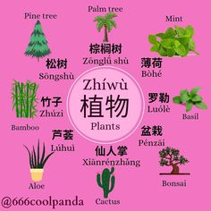 Basic Chinese, Chinese English, Learn Chinese, Traditional Chinese, Cool Panda, Cool Science Facts, Chinese Lessons, Chinese Language, Growing Plants