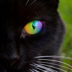 Rainbow Cats eye