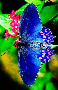 Butterfly Painting, Butterfly Wallpaper, Butterfly Crafts, Butterfly Art, Beautiful Bugs, Beautiful Butterflies, Amazing Nature, Beautiful Creatures, Animals Beautiful