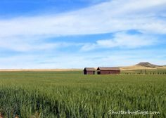 Outside of Laurel, Montana   ...my grandparents lived in Park City, just to the west of Laurel......