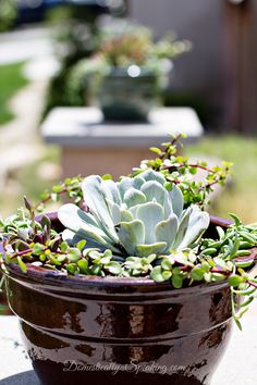 Creating a Drought Tolerant Succulent Planter - Domestically Speaking