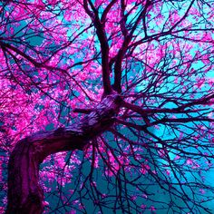 purple tree XII Art Print, Society 6. Don't care if it's photoshopped - the colors are glorious!
