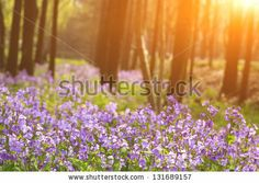 Morning in the woods by wang song, via ShutterStock