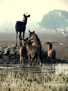 It is most popular for its Keoladeo National Park, also known as #bharatpur bird sanctuary. http://www.bharatpurbirdsanctuary.in/blog/catch-a-glimpse-of-beautiful-birds-at-the-keoladeo-and-sariska-national-park/