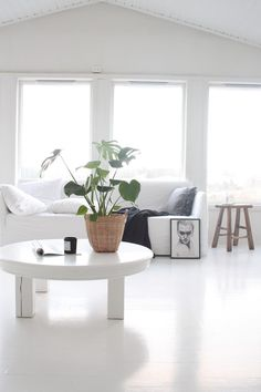 Bright minimalist living room with a potted plant for a splash of color.