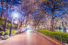 Seokchon lake park at night and cherry blossom of spring in seoul, south korea , Episode Interactive Backgrounds, Episode Backgrounds, Old Mansions Interior, Bedroom Designs Images, Cities In Korea, South Korea Seoul, Lake Park, Cool Animations, Foto Jungkook