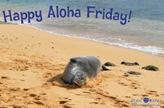 """Monk seal on Poipu Beach says, """"Happy Aloha Friday!"""" Actually, this photo was taken yesterday, and she was sleeping, but I'm sure she would say Happy Aloha Friday today if she could!"""
