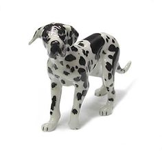 GREAT DANE Dog Harlequin Uncrop PUPPY