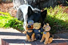 K-9 Colt poses with his new friends.  THE MUST HAVE Stocking Stuffers for only $12. Proceeds go to Explorers (bears) and equipment for the K-9 Unit (dogs). Order at (408)730-7140 for pick up in the DPS Lobby at 700 All America Way.  *Note, there is a stuffed K-9 with a vest that has the DPS shield on back and one with the K-9 tag, so make sure to specify which K-9 you would like to order  TO order via email send a message to ltauck@sunnyvale.ca.gov (Leanne Tauck)