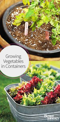 Growing vegetables in containers is easier than you might think! Get fresh produce in your backyard, big or small, by following these amazing gardening tips. Even small spaces can grow vegetables, and we're proving it with these container gardening ideas.