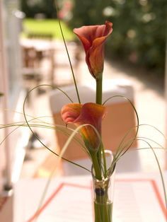 Brown Flowers, Calla Lilies, Ecommerce Hosting, Wedding Flowers, Lily, Colors, Sweet, Modern, Quotes