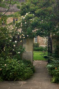 Climbing Rose at Corpus Christi College, Oxford by Robert Mealing