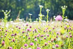 Sustainable Landscaping: Establishing a Managed Meadow Edible Plants, Edible Garden, Organic Vegetables, Growing Vegetables, Herb Garden, Vegetable Garden, Purple Flowers, Wild Flowers, Flower Close Up