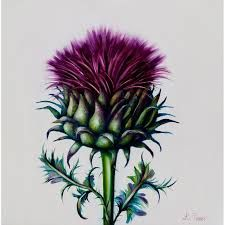 Image result for thistle watercolor