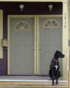 Waiting... #great #dane #dog