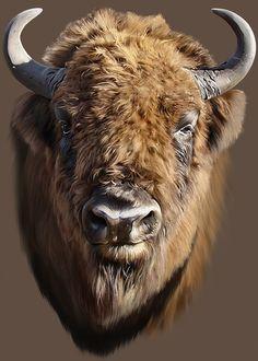 Buffalo Animal, Buffalo Art, Buffalo Skull, Native American Pictures, Native American Artwork, Animal Sketches, Animal Drawings, Buffalo Pictures, Cow Skull Art