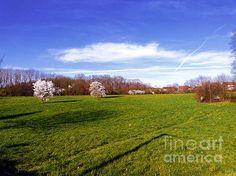 Green Field by Jasna Dragun @jasnaart
