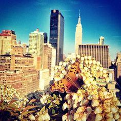 Urban Butterfly, New York City - @johndeguzman